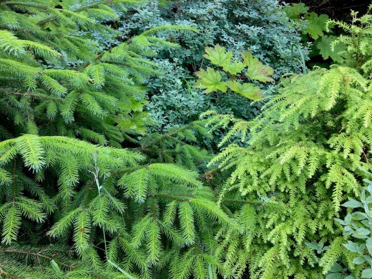 2042 forest margin