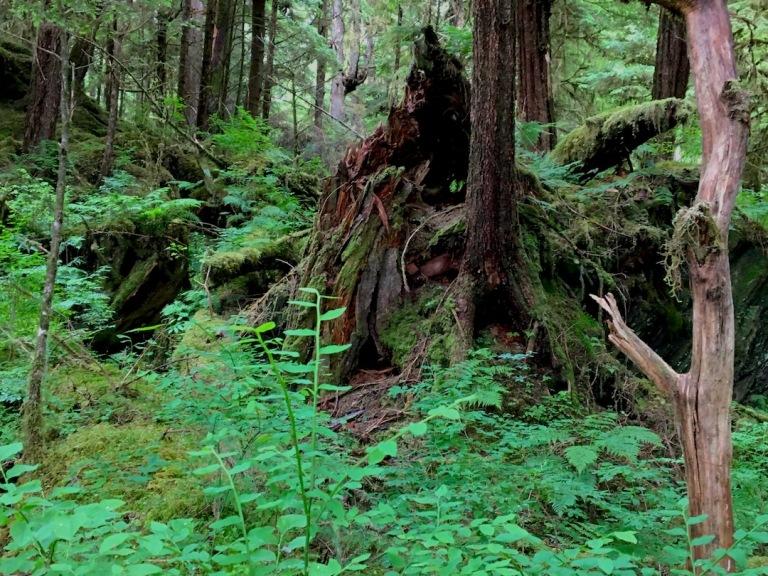 2049 old stump