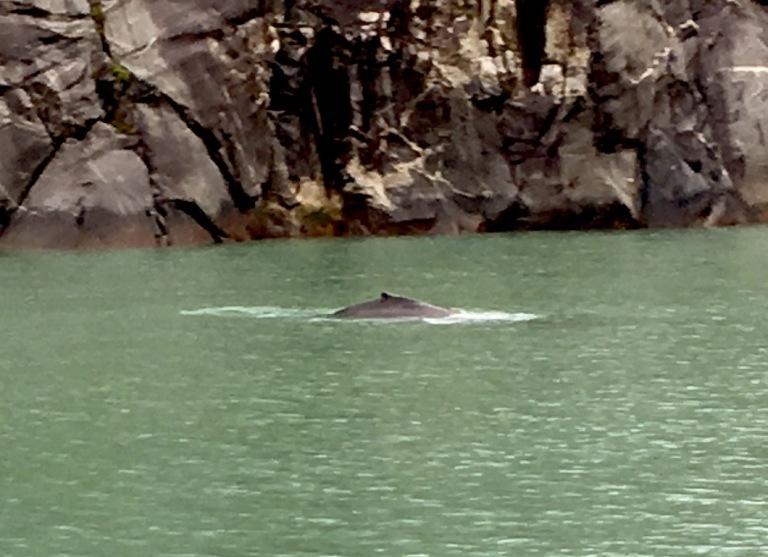 IMG_*2121 humpback